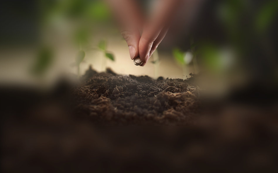 semeando.jpg