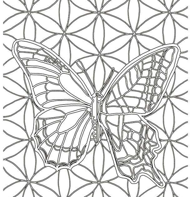 4 B1 Butterfly.jpg