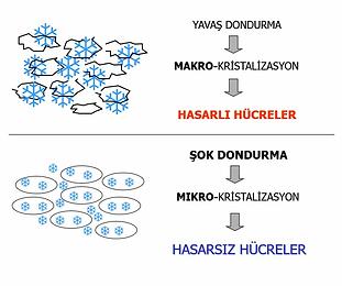 su-molekulleri.webp