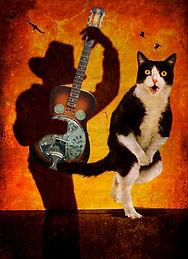 Shadow plays for the CatBeverlyBrock.jpg