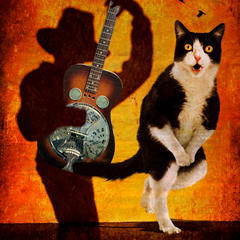 Beverly Brock, Shadow Plays for the Cat