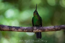 5 star hummingbird looking up 24x16-Quick Preset_5777x3851