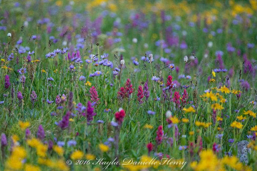 Rainbow of Wildflowers