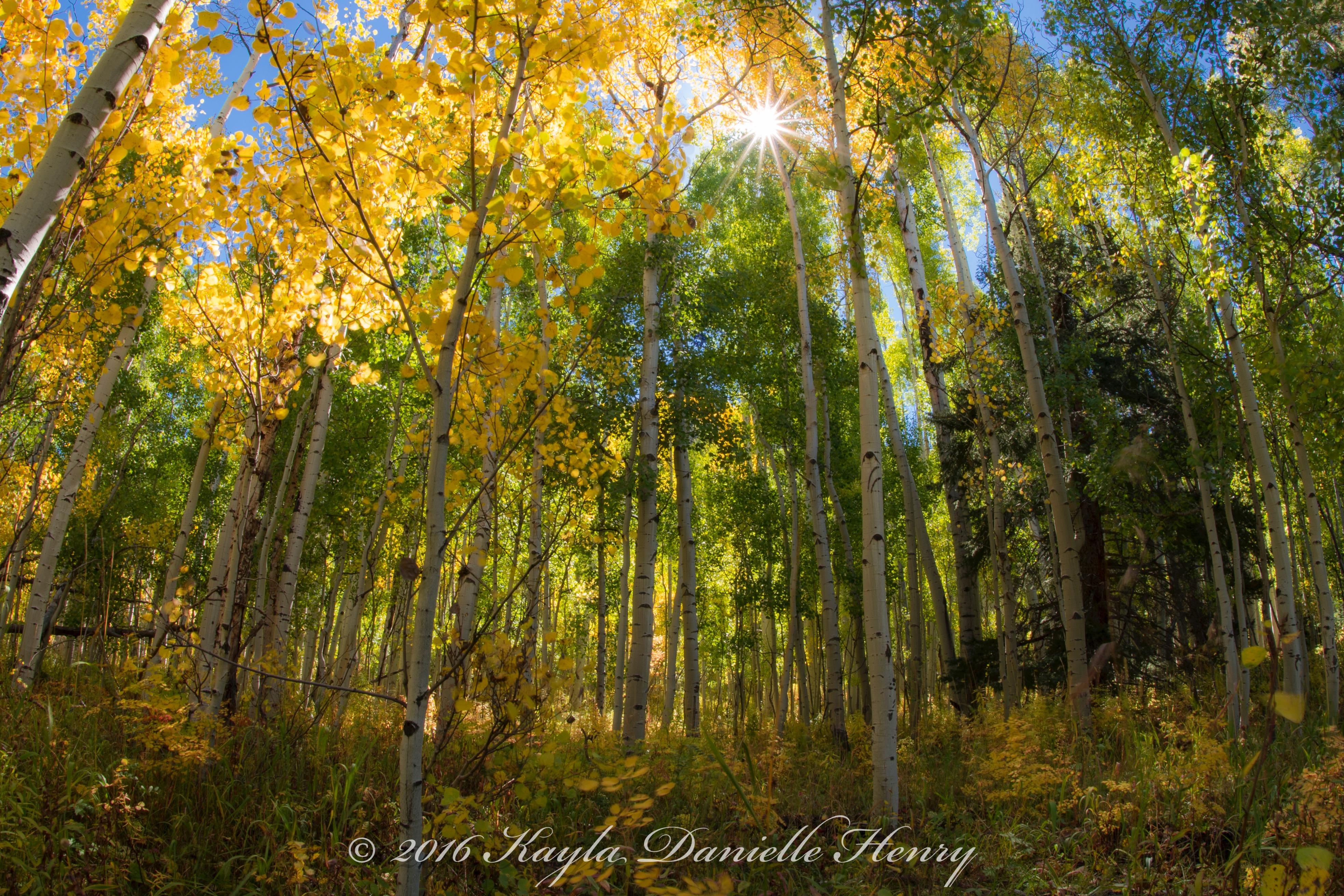 Aspen Forest 24x16-Quick Preset_3936x2624