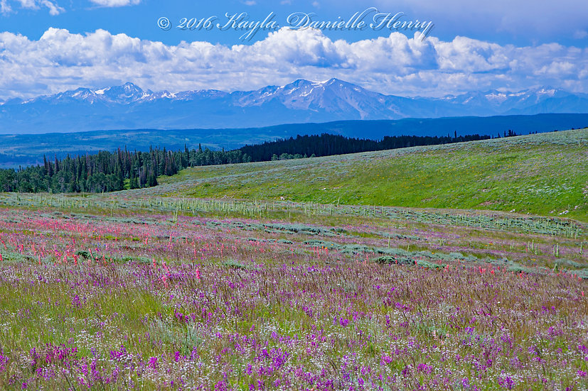 Alpine Wildflower Field