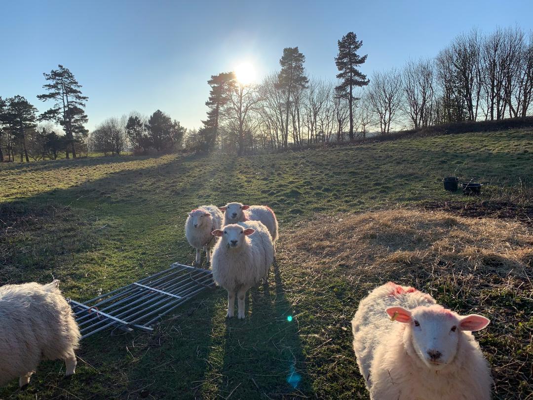 sunny hogs