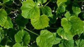 Cucumber & Zucchini/Squash Plant Start Pre-Order