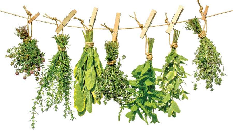 Herb Plant Start Pre-Order