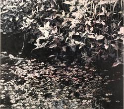 ミメーシス/行為の堆積/ Waterweeds