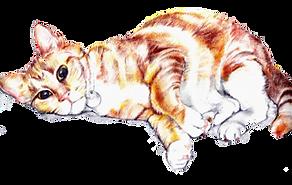 cutout cat_edited.png