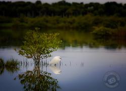 Silent Marsh