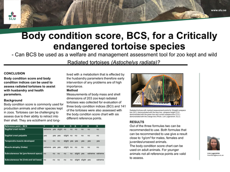 Can body condtion score, BCS, be used as a welfare and managment tool for Radiated tortoises?