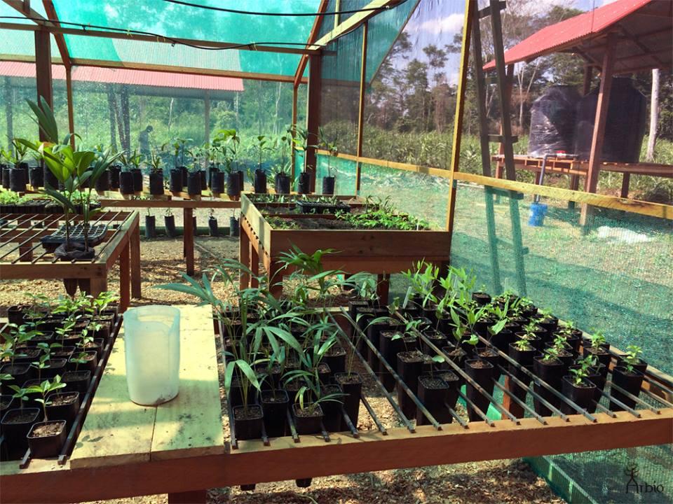Arbio Nursery