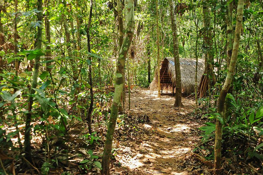 Refuge in the Jungle