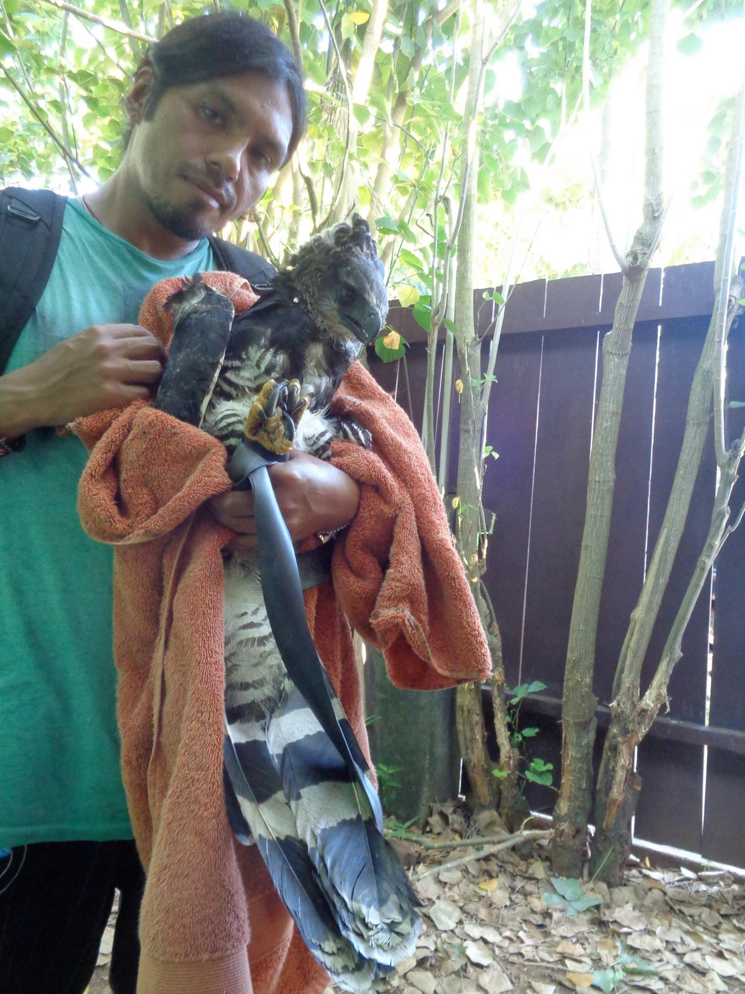 Healing a Harpy