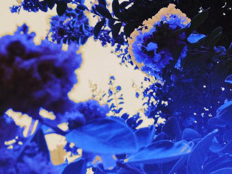 LOOSE LEAVES 2 – PHANTOM THRETT
