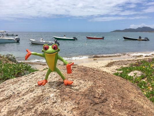 frog puerto 2.jpg
