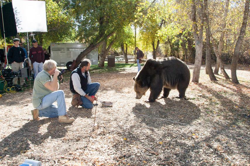 The Bear... for Harris Teeter