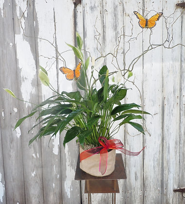 Peace Lily with Spring Branch