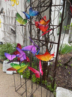 Outdoor Butterfly Stakes