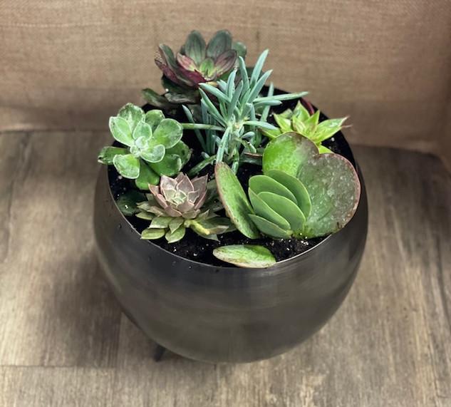 Lg. Succulent Pot