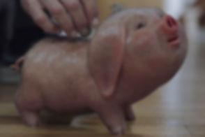 piggy2_edited_edited.jpg