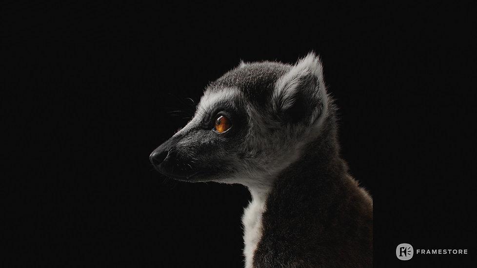 joel-best-lemur-headstills-1004.jpg