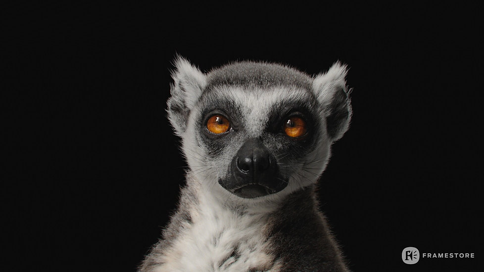 joel-best-lemur-headstills-1006.jpg