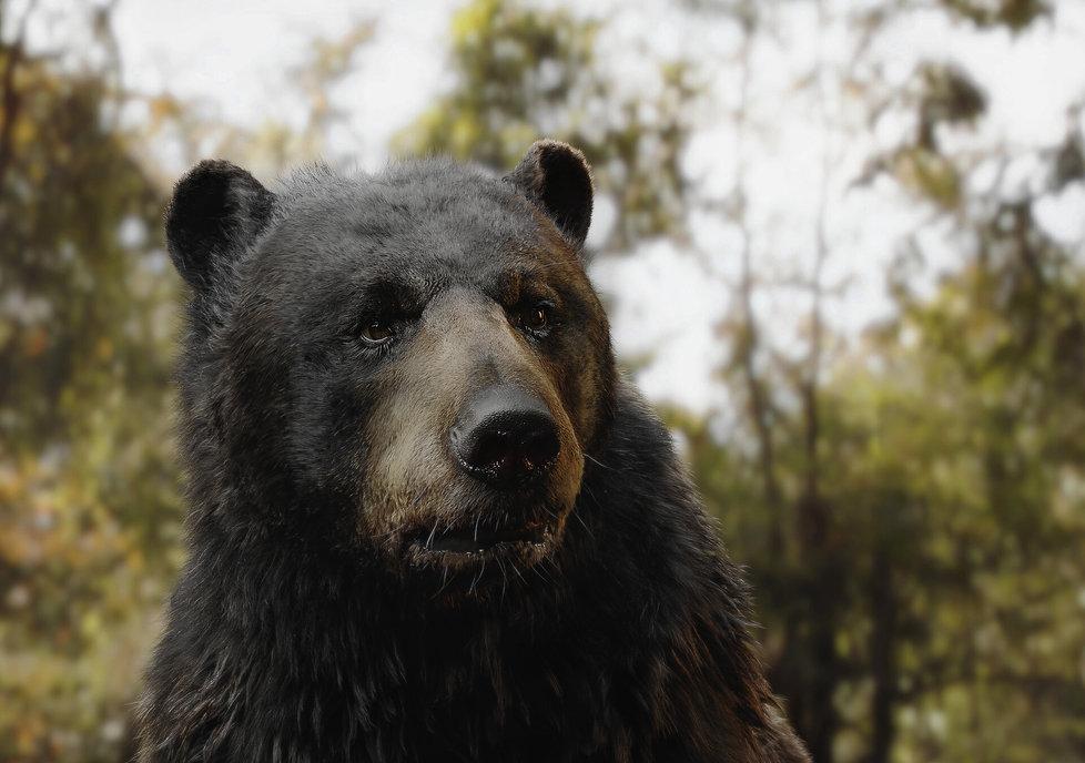 bear_edit_side1.jpg