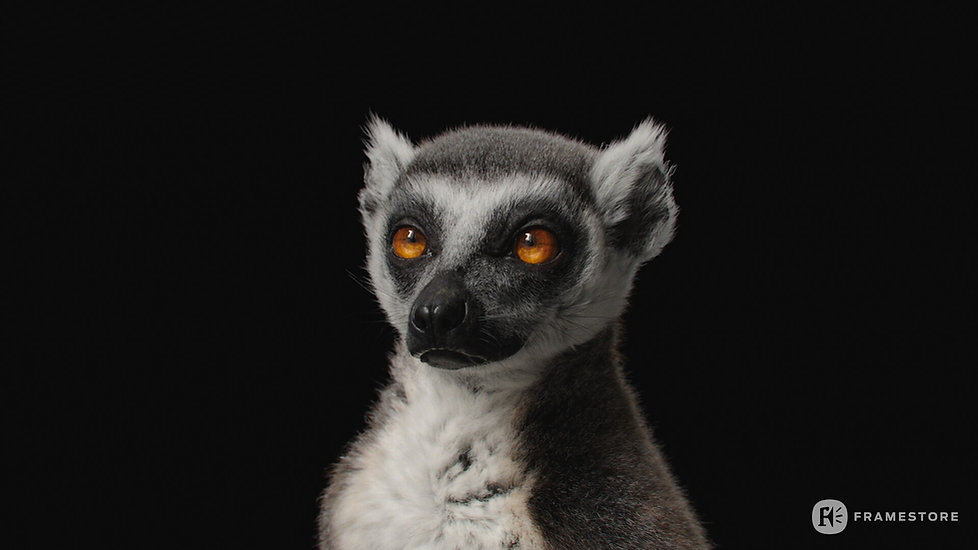 joel-best-lemur-headstills-1001.jpg