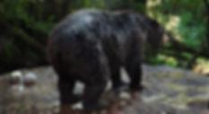 bear_02.jpg