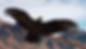 Vulture_Back.png