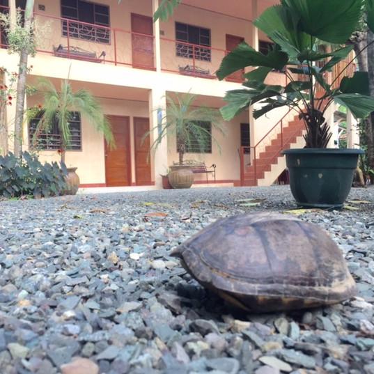 Hotel Tropical Sands Dominical Eco Inn b