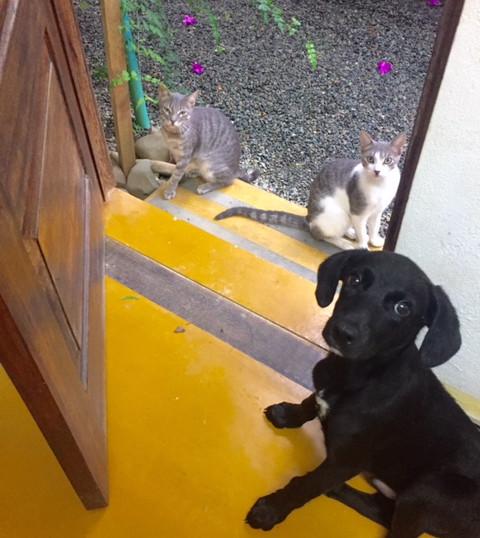 little buddies.jpg