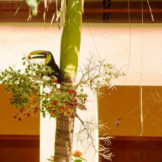 TROPICAL SANDS DOMINICAL ECO INN's tropical garden