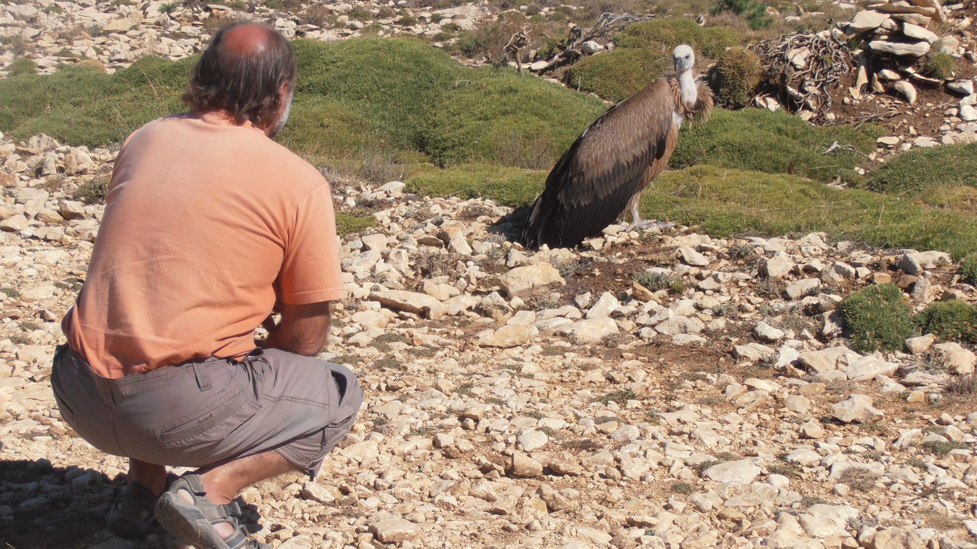 pays basque découverte nature vautour