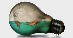 Fish in bulb