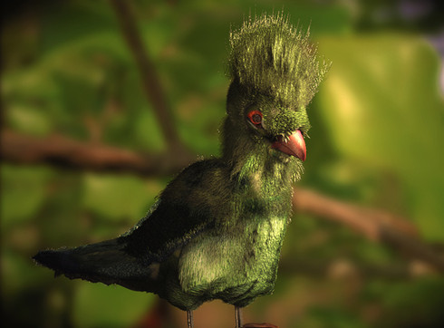 AFRICAN TURACO