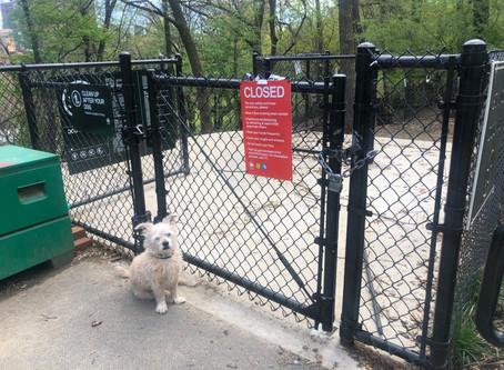 No Dog Park? No Problem!