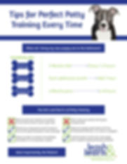 Private Puppy Training NYC, puppy potty training
