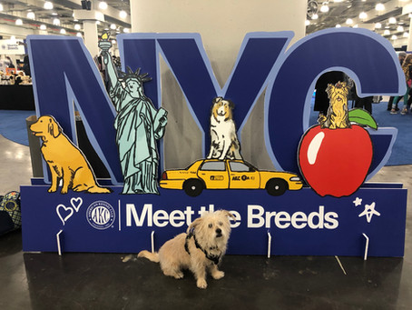 Meet The AKC Breed Groups