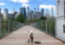 NYC Dog Training