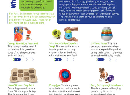 Puzzle Toys: The best thing you can do for you and your dog