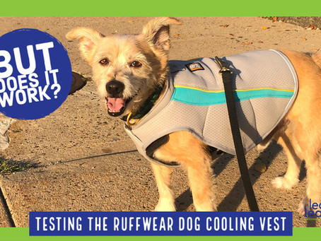 Ruffwear SWAMP COOLER™ DOG COOLING VEST Experience and Review