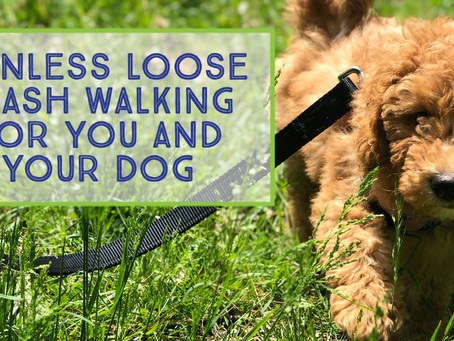 Painless Loose Leash Walking For You and Your Dog an In-Depth Guide