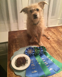 rally dog, positive reinforcement, first place, akc, proud, nyc dogs, nyc dog training, leash and learn