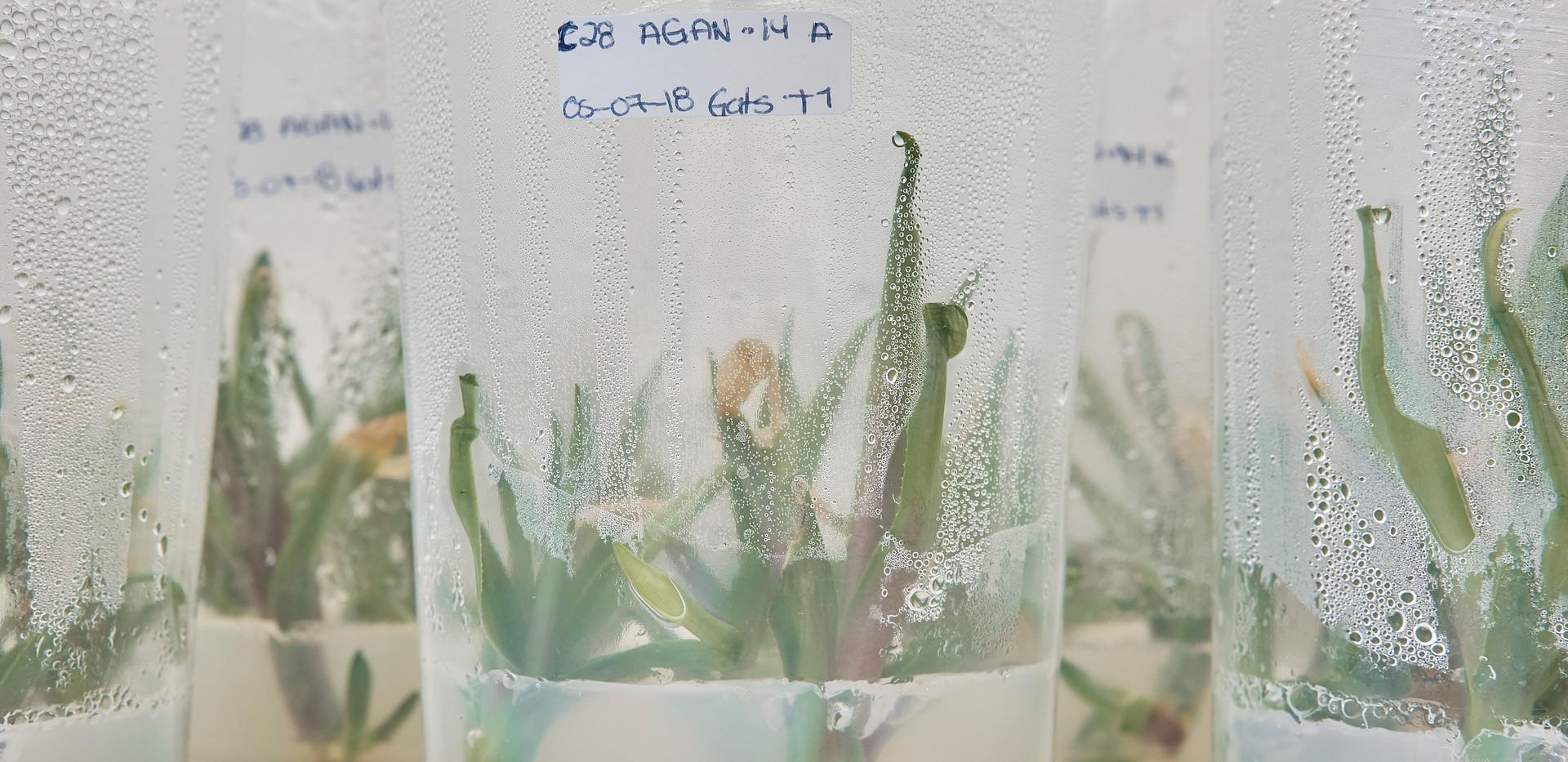Gogue Biotech Lab Agosto 2018 (6).jpg
