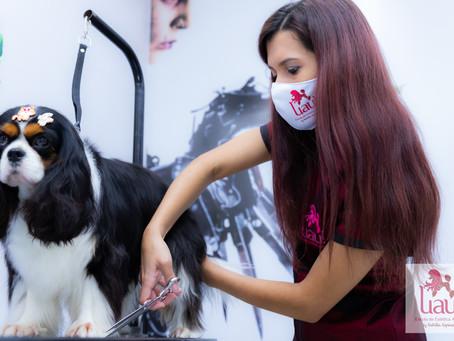 Com concorrência em alta, pet shops precisam oferecer tosas diferenciadas
