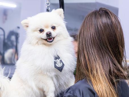 Que tal ser dono de um pet shop? O mercado só cresce e faturou R$ 40 bilhões em 2020