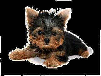 Dog 4.png